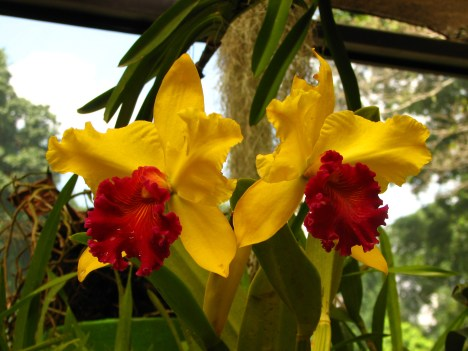 Botanische tuin (37)