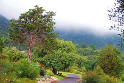Kirstenbosch Garden (15)