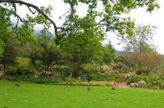 Kirstenbosch Garden (27)