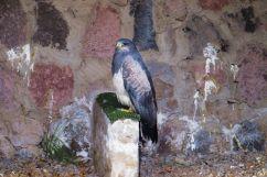 Parque Condor (6)