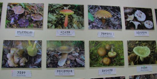 botanical-garden-13