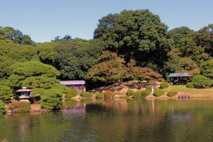 shinjuku-gyoen-garden-111