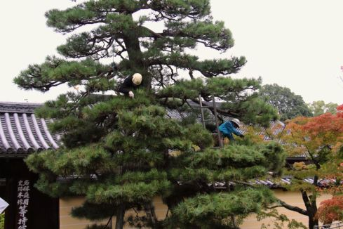 toji-in-temple-5