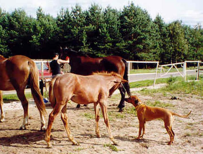 Duma i konie1