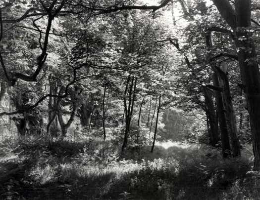 Early Summer at John Muir Country Park, Scotland