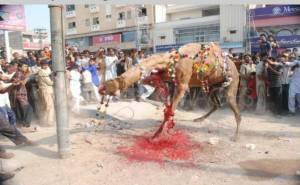 camel halal must stop