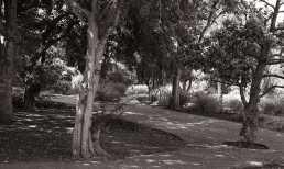 2009-08-14st-andrews015