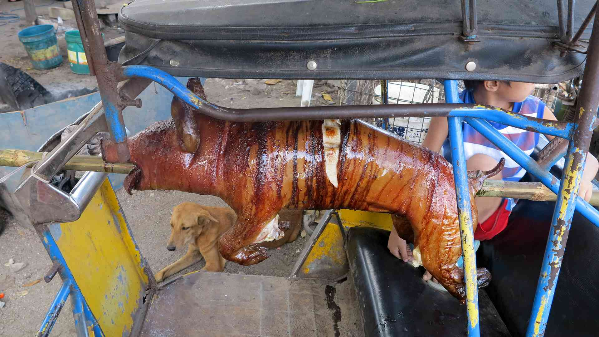 cooking - lechon baboy