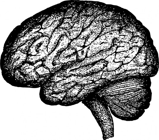 grey matter, white matter, brain, therapy, Stephen Rodgers Counseling of Denver