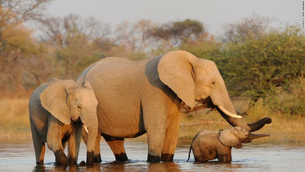 Do Elephants Hold the Key to Curing Cancer?