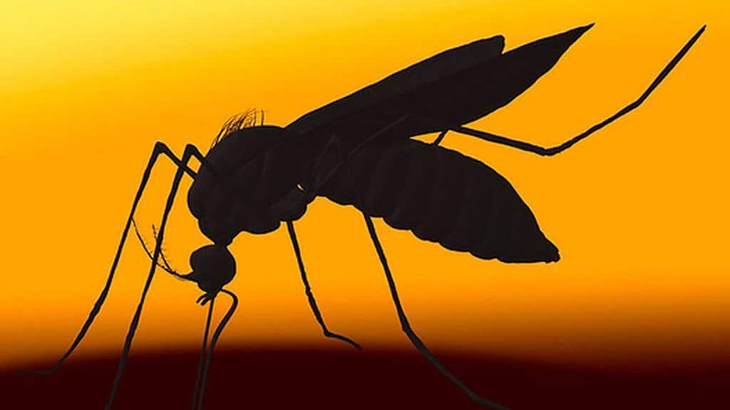 DARPA, Hurricanes, and the Zika Virus