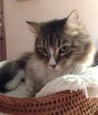 guest-cat-eh-2-4