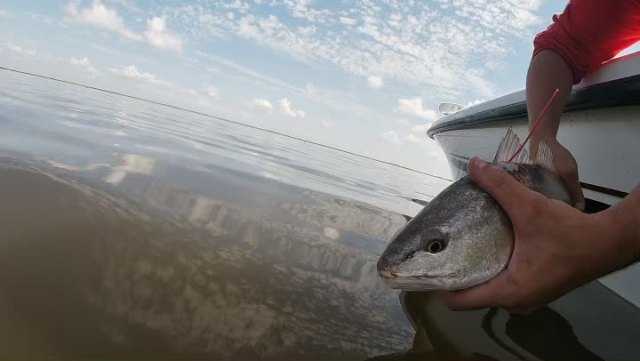 To some people this is just a redfish!