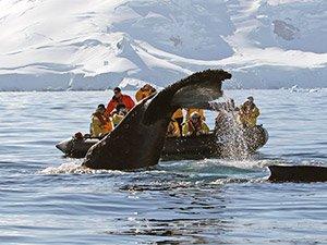 Отзыв о путешествии в Антарктиду Кирилла