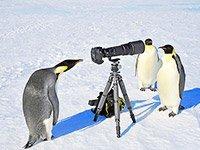 Экспедиционный тур в Антарктиду