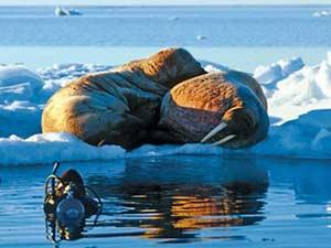 Экстремальный отдых в Арктике