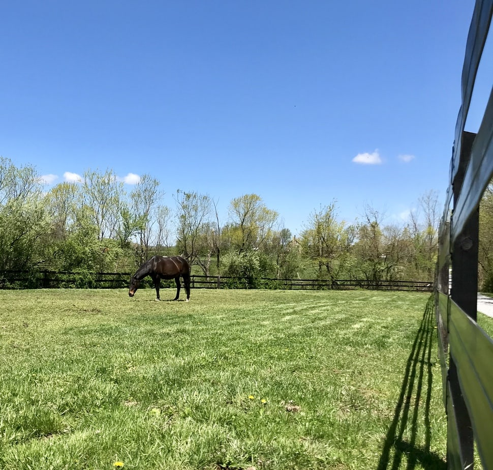 25 Acre Income Producing Loudoun County Horse Farm Below Appraised Value!