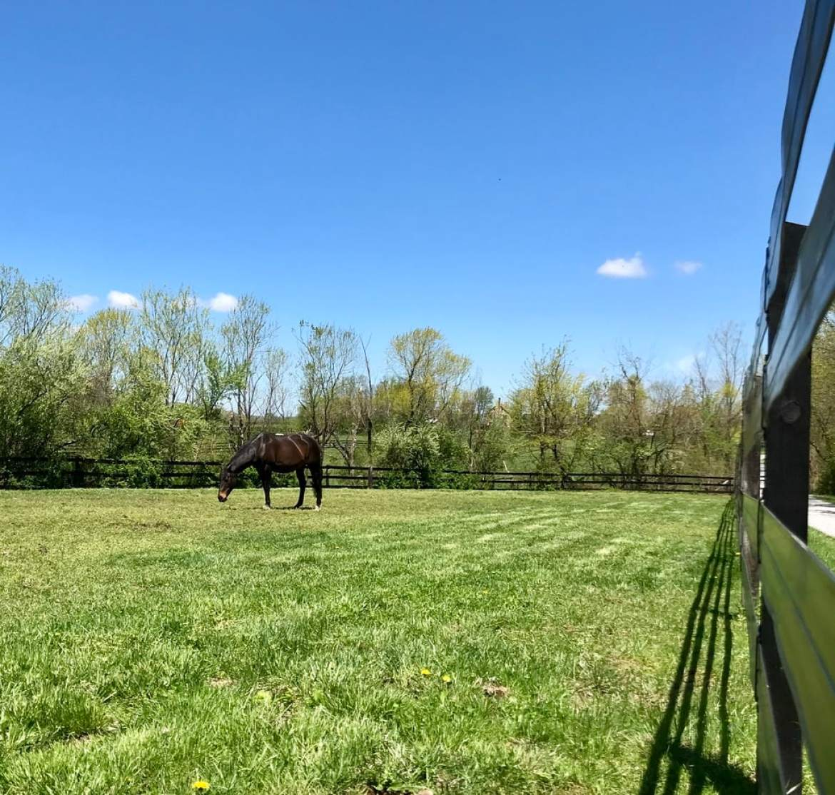 For Sale Loudoun County Horse Farm Below Appraised Value