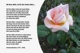 Die Rose blüht ich bin die fromme Biene – Clemens Brentano