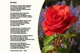 Die Rose – Richard Dehmel