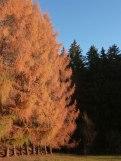Novemberwald 8