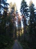 Novemberwald am Meiselteich 1