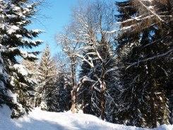 Klingenthal – Schneelandschaften 18