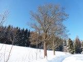 Klingenthal – Schneelandschaften 21