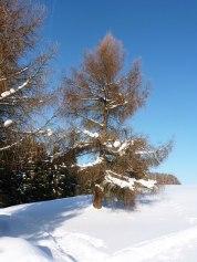 Klingenthal – Schneelandschaften 6