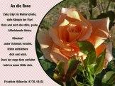 An die Rose – Friedrich Hölderlin