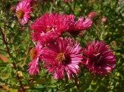 2014_09_28_Herbstblumen_2