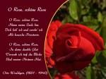 O Rose, schöne Rose – Otto Weddigen