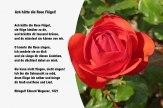 Ach hätte die Rose Flügel! – Ringulf Eduard Wegener