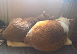radiatorseng til katte - 52 cm i bredden // 34 cm i dybden