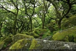 england2013-wistmanswood-3498