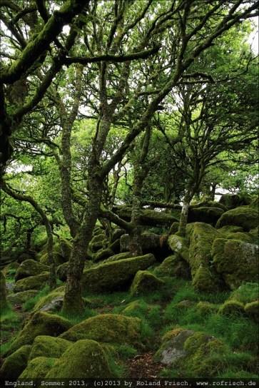 england2013-wistmanswood-3504