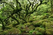 england2013-wistmanswood-3522