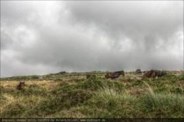england2013-wistmanswood-3558mantiuk06