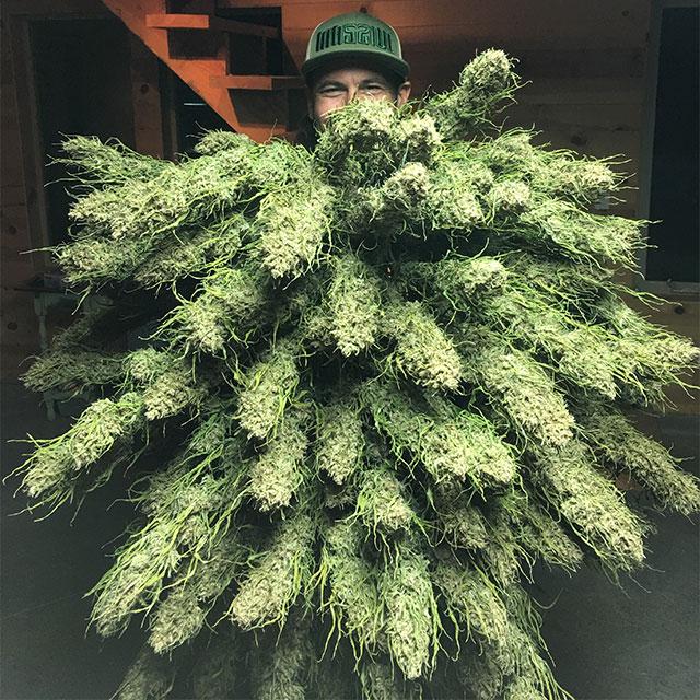 Roganja Southern Oregon Cannabis Flower Bouquet