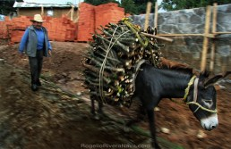 Donkey carrying firewood, followed by its owner, passing by in front of a building site