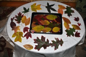 Glycerinated fall leaves-small