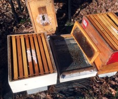 Langstroth bee hive