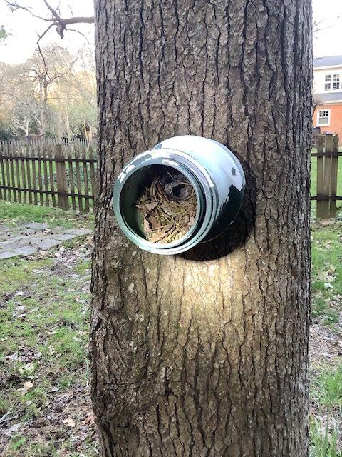 dummy nest of wren