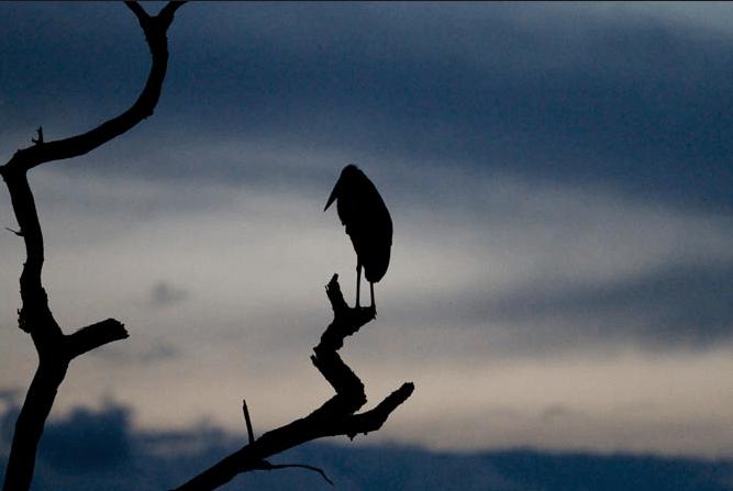 Stork & Blue Sky