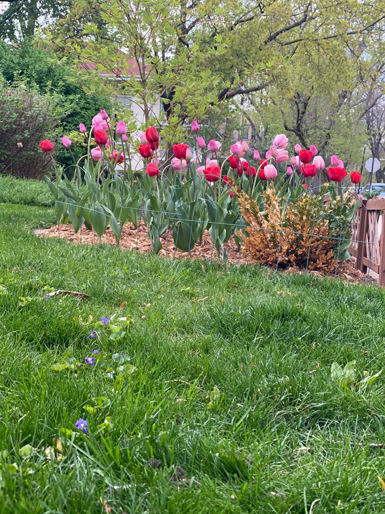 Spring in Rogers Park and Edgewater