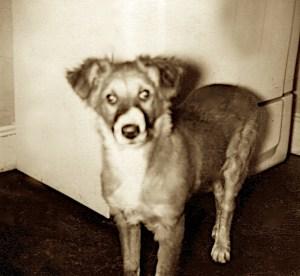Missy ca. 1958