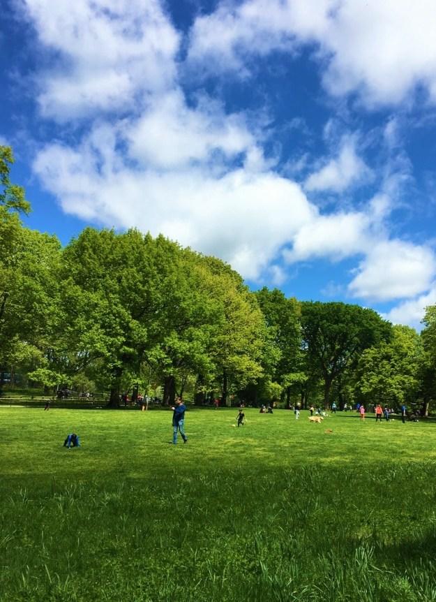 Central Park 11-36 a.m. 5-14-2017 (4).jpg