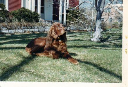Robbie, Smith family dog, Canton, MA