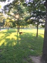 Juniper Valley Park, Middle Village, Queens, NY, August 7, 2016