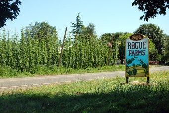 The Rogue Farms Hopyard in Independence, Oregon where we grow and harvest our own.